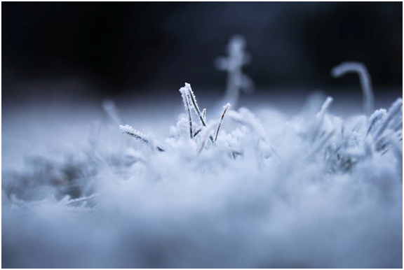 Why Winter is the Best Time to Get Your Carpet Professionally Cleaned